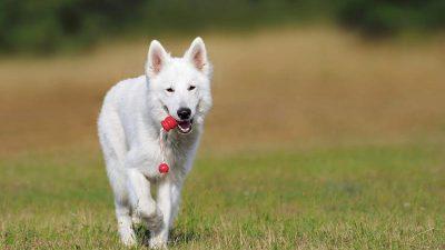 szkolenie psa (Copy)